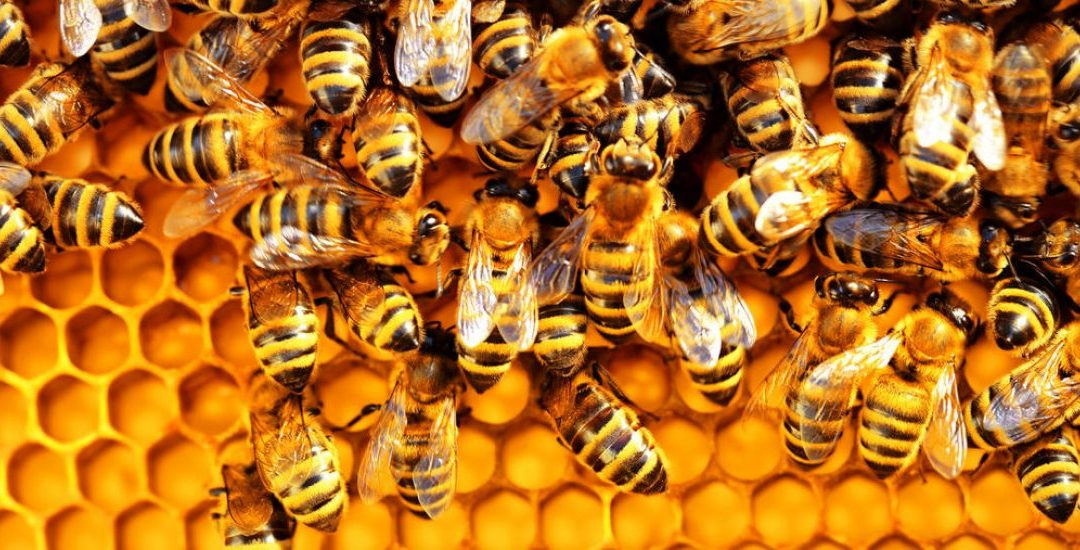 What Can Honey Bees Teach Us